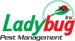 Lady Bug Pest Management