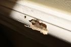 Evidence of Termites