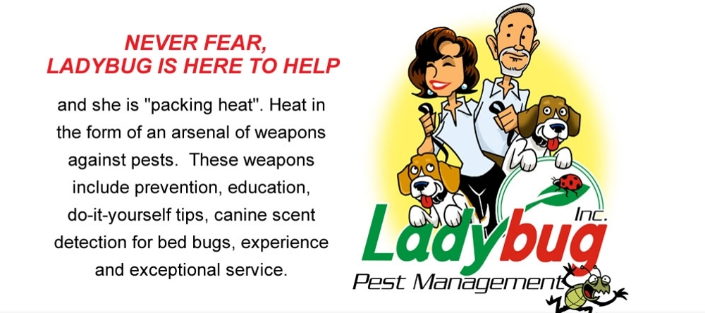 Ladybug PM